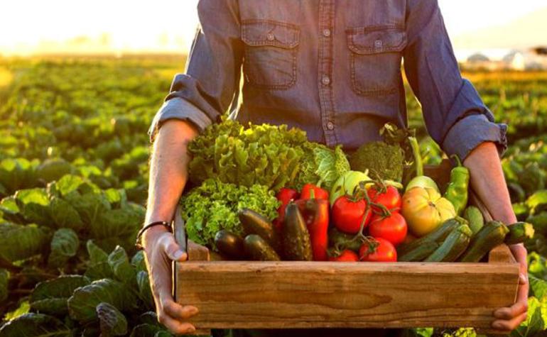 Evolución del sector de la alimentación